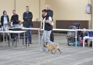 IDS Novi Sad October 20th 2018